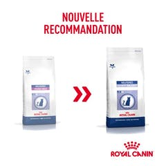 Royal Canin Young Male pour chat 10kg